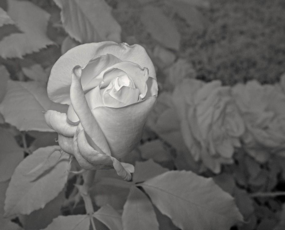 Dzień Dziecka Utraconego W Rosarium Wwwgoscpl