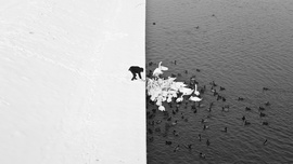 A Man Feeding Swans in the Snow-1